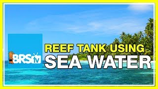 FAQ #36 Can saltwater from the ocean be used in a reef tank?