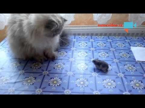 Kočka s křečkem ...
