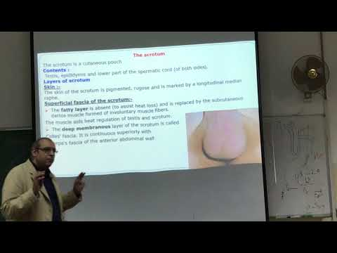 UGS Anatomy Lecture #8 Part 1 - Dr Ahmed Salman