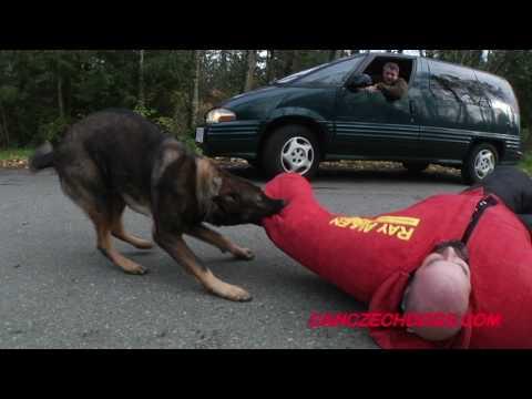 Protection Dog Vs Road Rage/Car Jacker