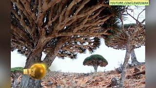 Video Socotra : Mungkinkah Pulau Dajjal? MP3, 3GP, MP4, WEBM, AVI, FLV Oktober 2018