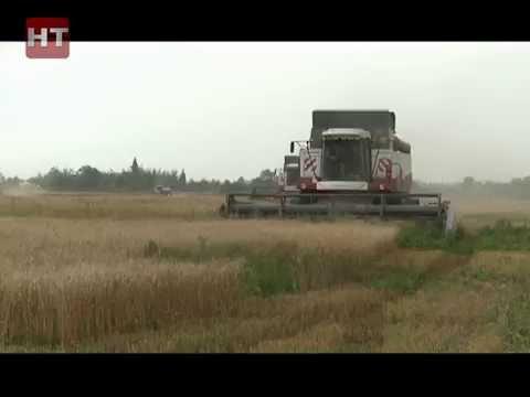 На новгородских полях дан старт зерноуборочным работам