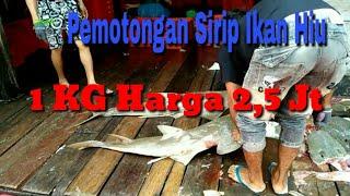 Video Pemotongan ikan hiu MP3, 3GP, MP4, WEBM, AVI, FLV November 2018