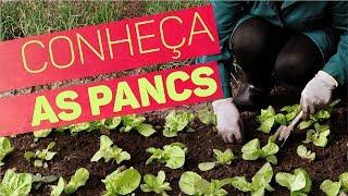 Descrição: Conheça as PANCS da Horta Comunitária da Saúde, opções super nutritivas para vegetarianos e veganos.