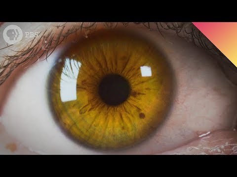 Where Your Eye Color Comes From SurprEYESing Science!