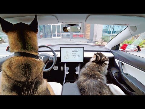 This car keep your pet safe and cool - Thời lượng: 40 giây.