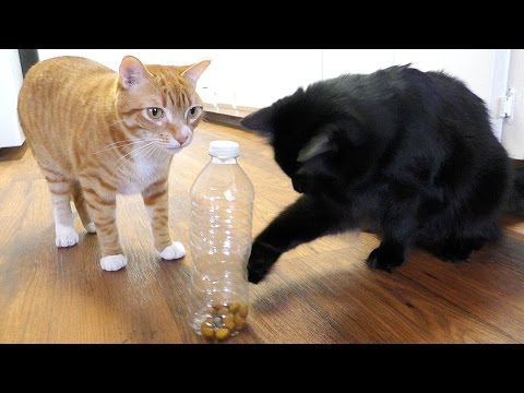 5 Life Hacks Fur Cat Owners