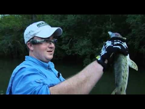 Bowfishing with Muzzy and the i-KAM EXTREMES