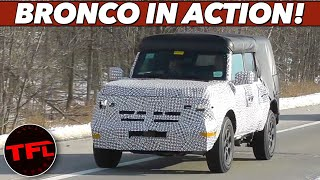Breaking News: The New Bronco Spied on the Road - Here's How it Compares To The Wrangler & Defende by The Fast Lane Car