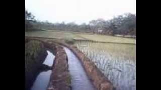 Kampung & Kebunku TercintaDs. Limbangan Jaya (Lim - Jay)By: Putra Limjay I/IX