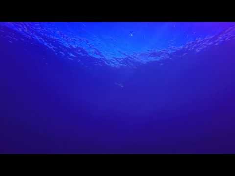 Tiburones martillo en El Hierro