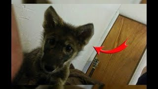 Video This Man Adopts A Stray Puppy, But Later Realized It Was Something Else. MP3, 3GP, MP4, WEBM, AVI, FLV Juli 2019