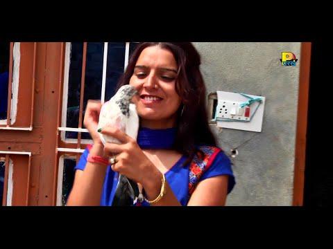 Video New Haryanvi Songs 2015 - Kabutar Jaiye Re - Haryanvi Dj Songs - Latest Haryanvi Songs download in MP3, 3GP, MP4, WEBM, AVI, FLV January 2017