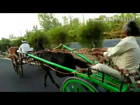 16 km Horse Cart Race in Pakistan on a HighWay