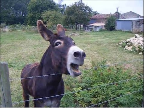 New Funny Donkeys Laughing Video Clips Compilation😂😍😂