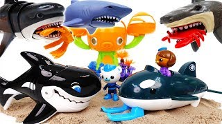 Video Shark Attack~! Octonauts GUP-O Rescue Sea Creatures With Orca - ToyMart TV MP3, 3GP, MP4, WEBM, AVI, FLV Maret 2018