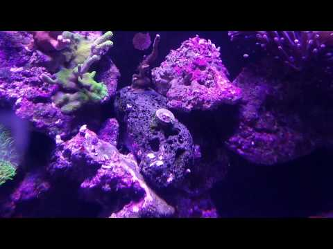 how to care for pulsing xenia