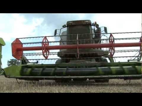 Shooting rabbits from a combine harvester