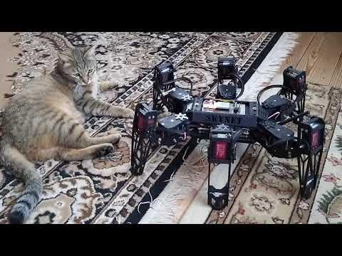 Робот-паучара мучает котэ
