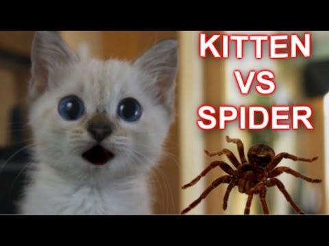 Маленький храбрец против боооооольшого паука