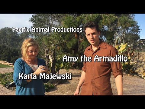 Fascinating Nouns EXTRA:  Amy the Armadillo