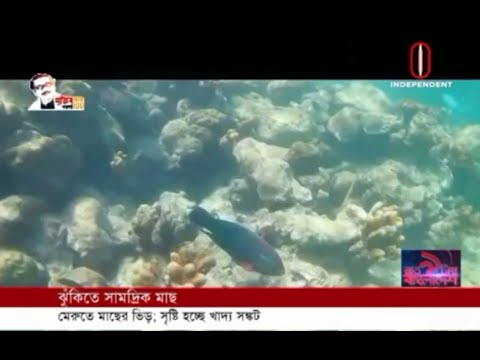 Marine fish at risk (05-07-2020)Courtesy:Independent TV