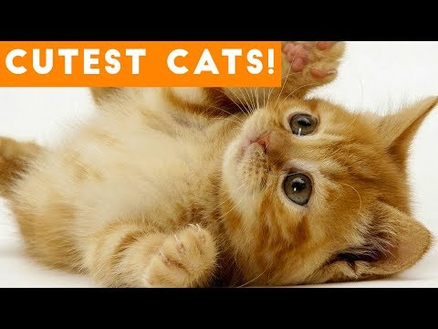 Ultimate Cute and Funny Cat Compilation 2018   Funny Pet Videos