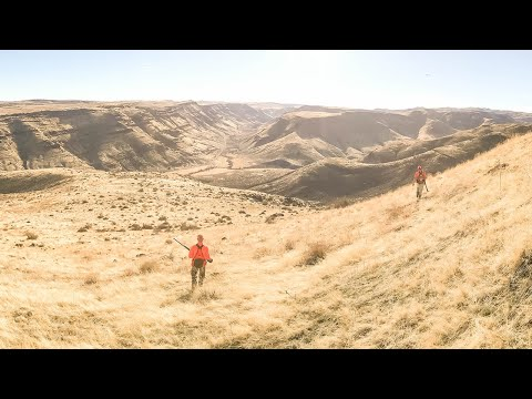 Hunting Idaho Mountain Birds - Chukar, Hungarian Partridge & Quail | The Flush: Season 10, Episode 7