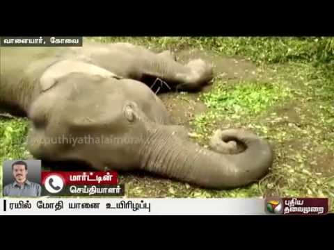 Elephants-in-trouble--Detailed-report-from-our-correspondent