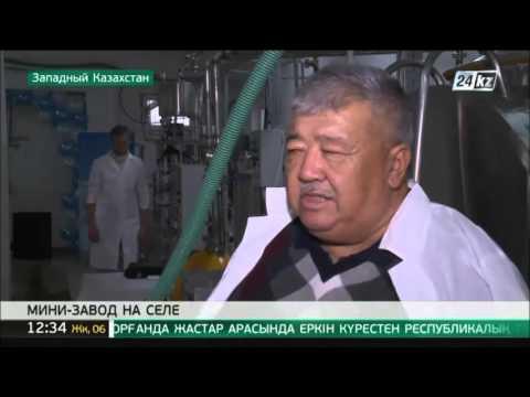 В ЗКО открыли молочный мини-завод
