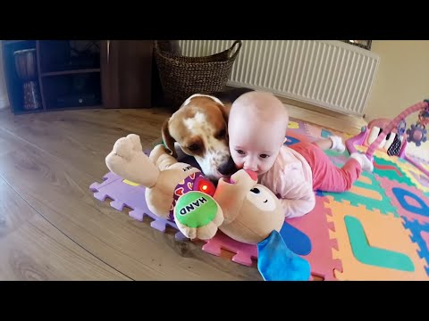 Dog and little baby plays with singing toy. Cute dog and baby video