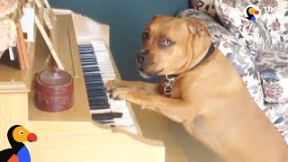 Dog Plays Piano For His Mom | The Dodo by The Dodo