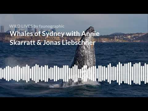Episode 8: Whales of Sydney with Annie Skarratt & Jonas Liebschner