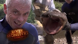 Catching A Giant Japanese Salamander By Hand - River Monsters