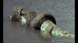 What You Didn't Know About The World's BIGGEST Snake! by Epic Wildlife