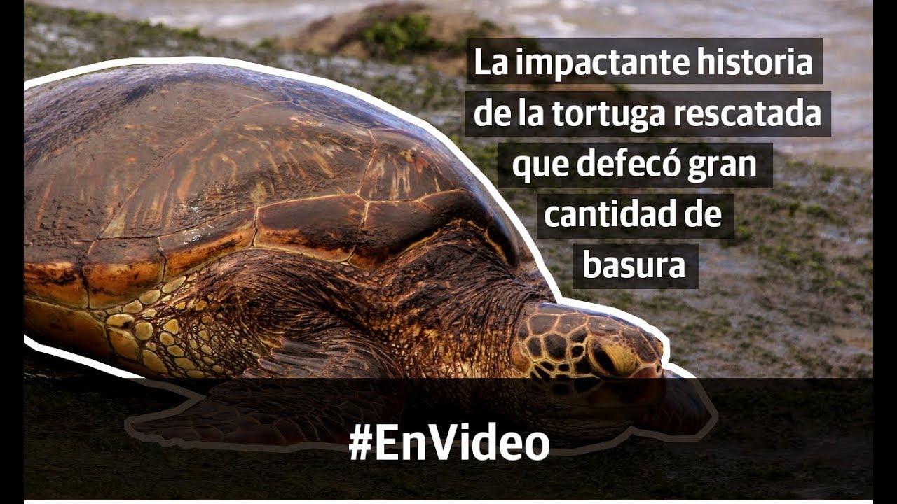 Tortuga verde rescatada en Argentina evidencia el problema de basura en los océanos