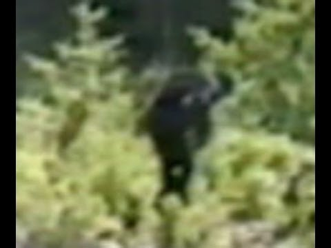 Top 5 Bigfoot Photos