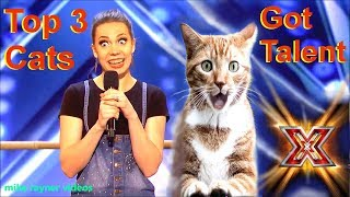 Download Video Savitsky Cats Got Talent Auditions! Amazing Cat Talent! Best Top 3 Funny Cute Animals! AGT 2018 MP3 3GP MP4