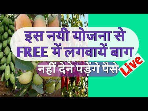 Free plantation information फ्री में कैसे बाग लगाएं