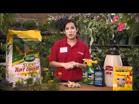 how to control oxalis weed