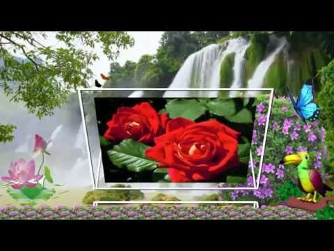 С розою красивою
