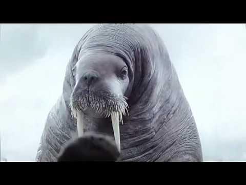 Spot Vigorsol - Walrus Funny Commercial