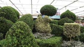 #720 Chelsea Flower Show 2012 - Topiary Arts - Englische Schneidekunst