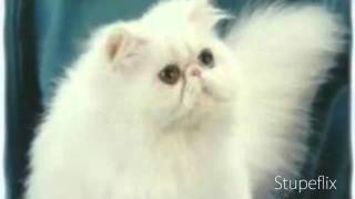 Top 5 Most Beautiful Cat Breeds
