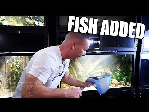 ADDING THE FISH!!