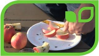 Die Apfelsorte Ninifee auf Schloss Eutin