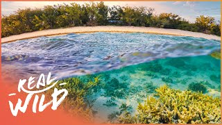 Nonton The Secrets Of The Oasis  Australian Desert Animal Documentary    Wild Things Film Subtitle Indonesia Streaming Movie Download