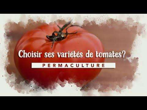 Quelles variétés de tomates choisir dans mon jardin en permaculture?