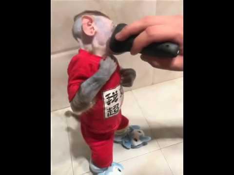 Shaving monkey