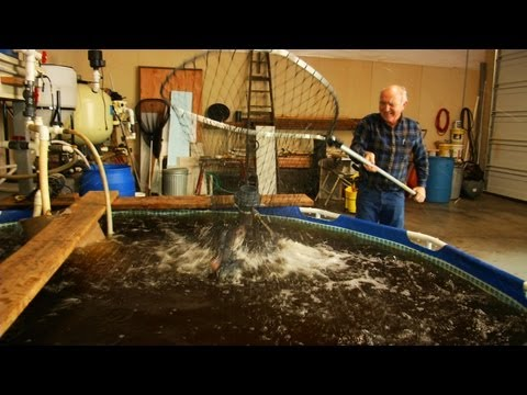 Next Level Sustainable Aquaponics System Design